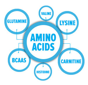 What does amino acids do for plants?