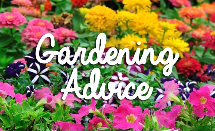 Great gardening advice and useful tips