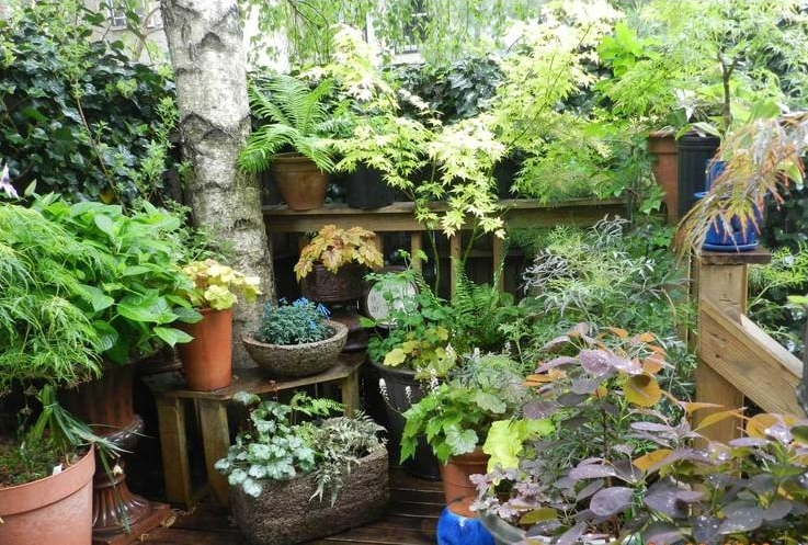 Everyone can have a small garden in their home