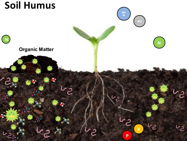 Soil that contains humus