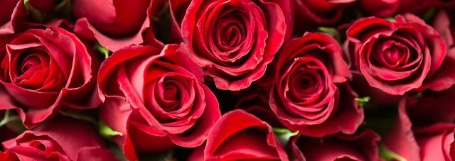 blooming red roses bouquet