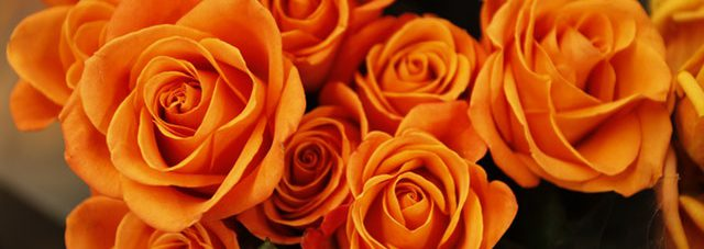 orange blooming roses bouquet