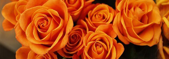 orange blooming roses bouquet