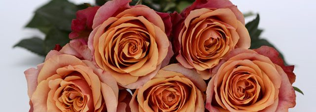 orange pinkish blooming roses bouquet